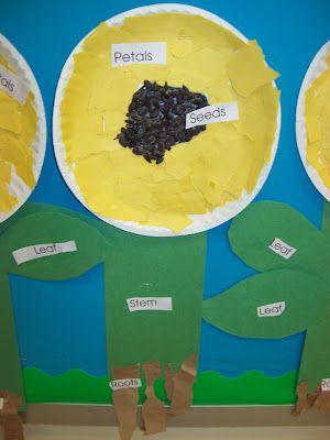 sunflowerPaper Flower, Preschool Teachers, Pre K, Chalk Talk, Schools Stuff, Kindergarten Blogs, Plants United, Paper Plates, Kindergarten Plants