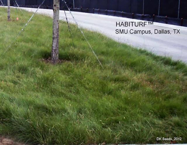 Native Southwest Grass Mixes Offer Alternative to Xeriscape Gardens: Habiturf and other grasses offer lawn alternatives to xeriscape gardens.