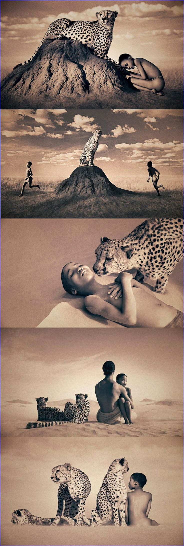 357 Best Art Cheetahs Images On Pinterest Big Cats Cheetahs And Nature