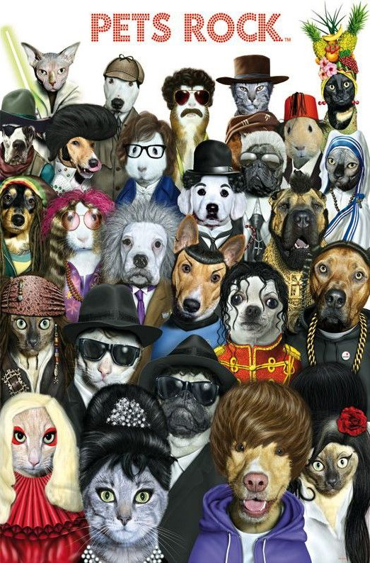 Educa Jigsaw Puzzles - Pets Rock