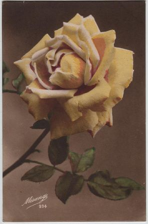 Yellow Rose, Mesange postcard