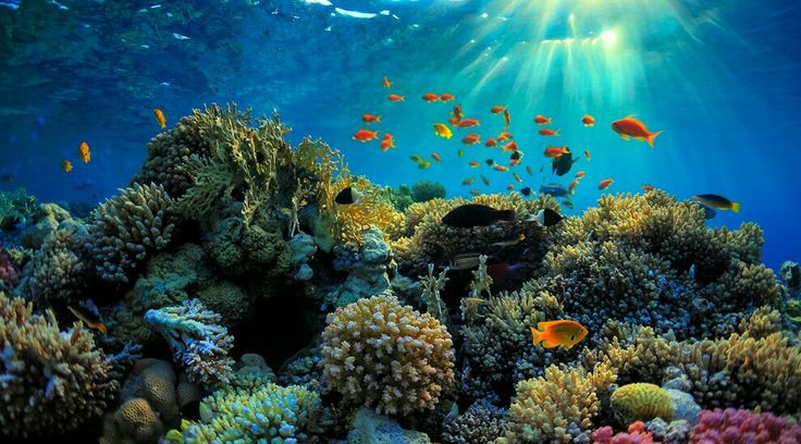 Go To The Great Barrier Reef- Australia