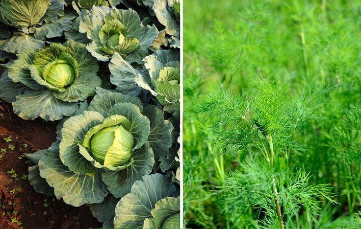 26 Plants You Should Always Grow Side By Side Companion 400 x 300