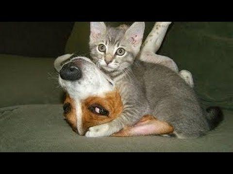 Videos de Risa de Animales Chistosos 2014
