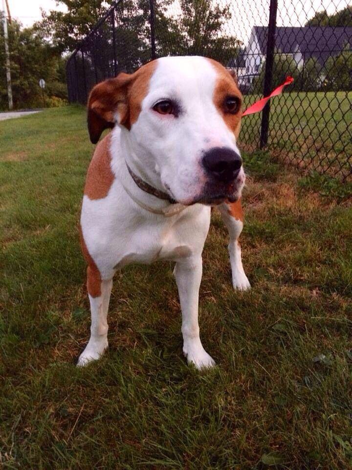 51 Best Maine Us Lost Dog Registry Images On Pinterest