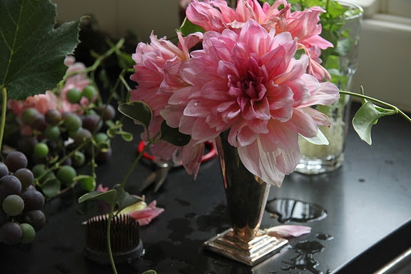"Dahlias from D. Landreth Seed Company, ""the oldest heirloom seed company in America. They've been selling the most luxurious seeds, bulbs, tubers and corms since 1784."" (description from Lily Stockman, bigBangstudio blog, August 25, 2011) photograph: Lily Stockman, taken at her parents' farmhouse"