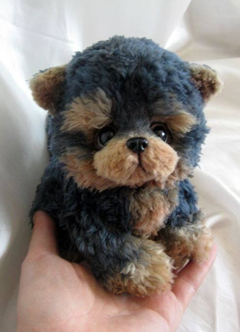 This Puppy Is Too Too Cute He Looks Like A Teddy Bear