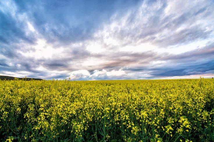 Yellow fields by Iulian Safta on 500px