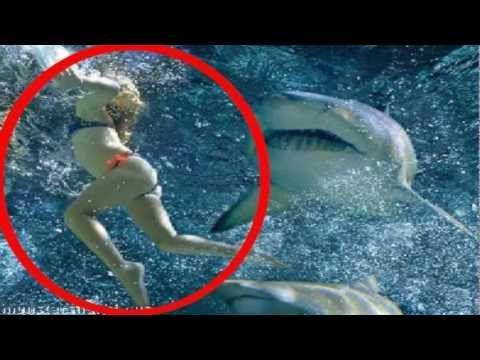 25+ best ideas about Information about sharks on Pinterest   Shark ...