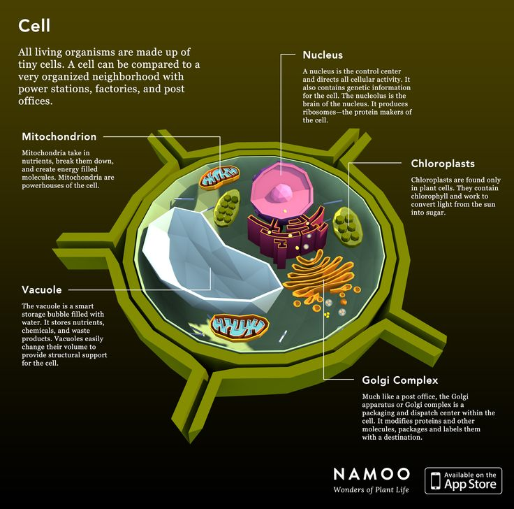 Plant Cell All Living Organisms Are Made Up Of Tiny Cells -6417