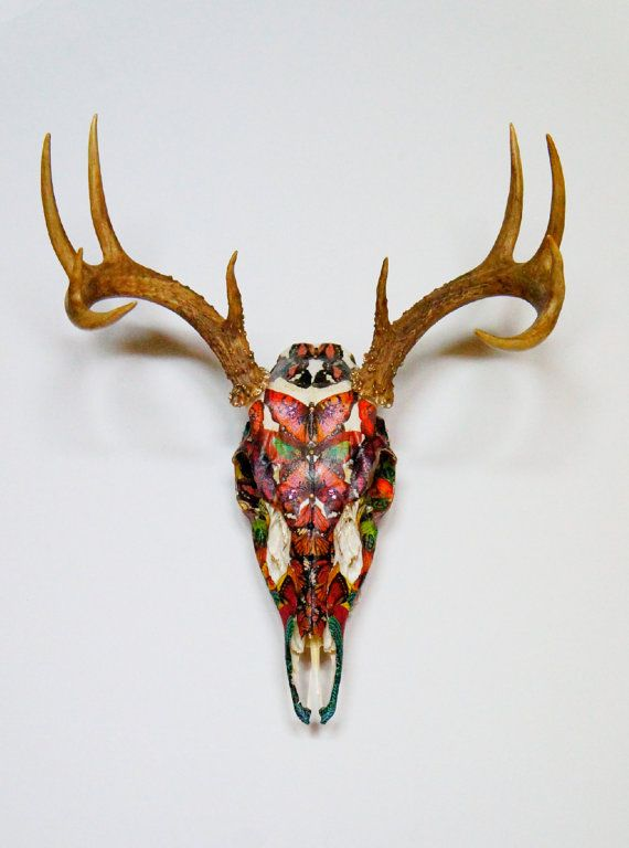 Botanical Butterfly Whitetail Deer Skull Taxidermy by MyrandaE