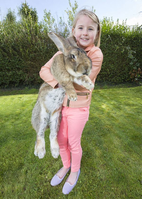 darius - the world's largest rabbit