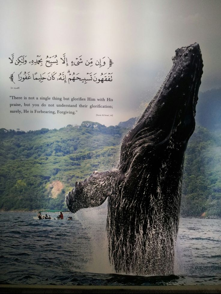 Al Quran Surah Al-Israa:44 This picture has been taken at the exhibition in Madinah 2015