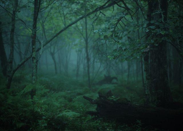 the forest by Amy Buxton, via Flickr  Blueridge Mountains  Pembroke, VA