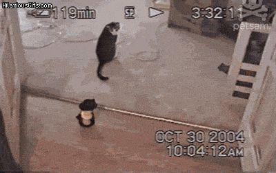 Imitating Kitty