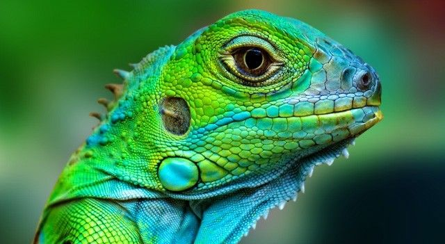 #lizard #lézard #caméléon #reptile #colorful #wild #eye #noipic