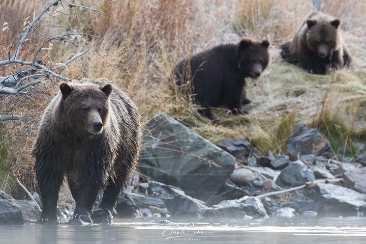 Mamma bear fishing for the whole family!