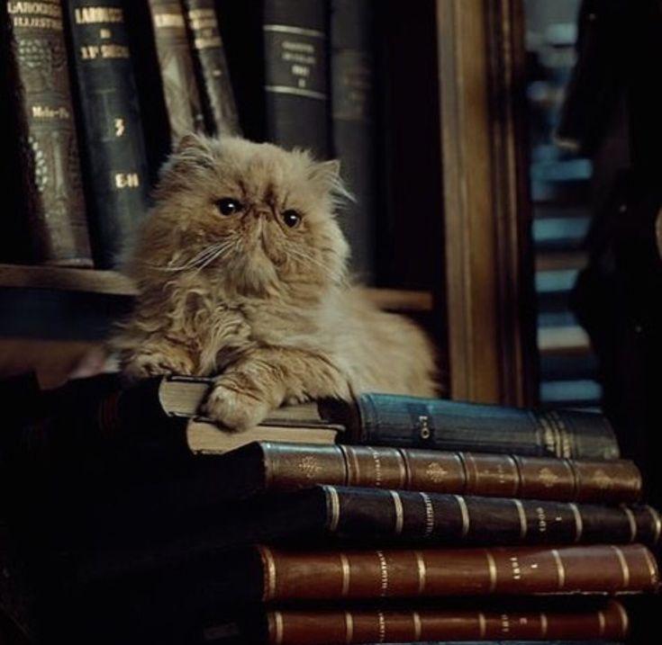 повеселится, картинки кошка и гарри поттер правильно экспонировать кадр