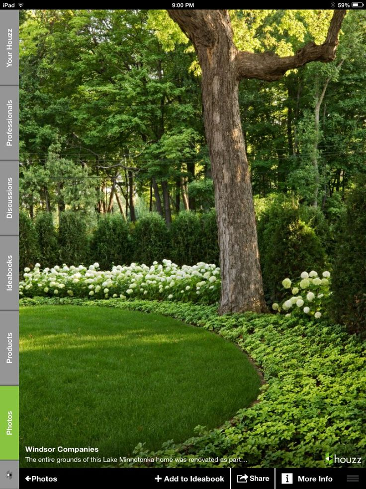 1000 Images About Backyard Forest Landscape On Pinterest