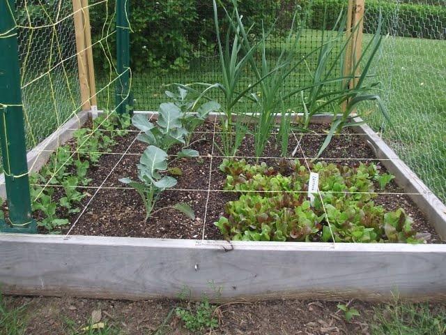 Deer proof garden vegetable gardens pinterest - Deer proof vegetable garden ideas ...