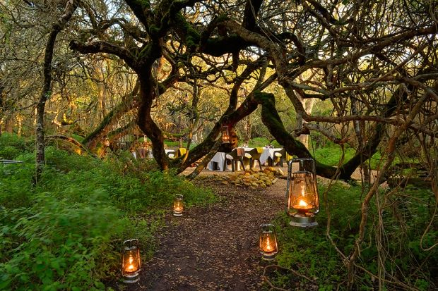 10 Things You Didn't Know About the Grootbos Experience | Grootbos #DestinationDining #dine #boma http://www.grootbos.com/en/blog/travel/10-things-you-didnt-know-about-the-grootbos-experience