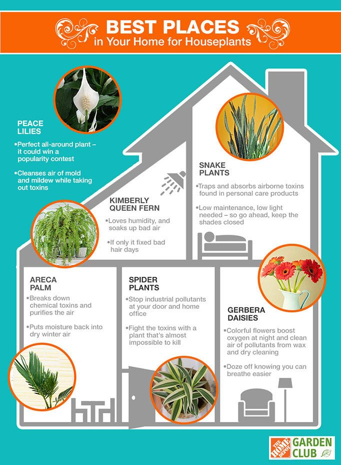 Indoor plants help soak up bad air, removing airborne toxins and pollutants that regularly find their way into your home, Knowing where in your home to place houseplants will help create a good natural defense against indoor air pollution. Read more at The Home Depot Garden Club.