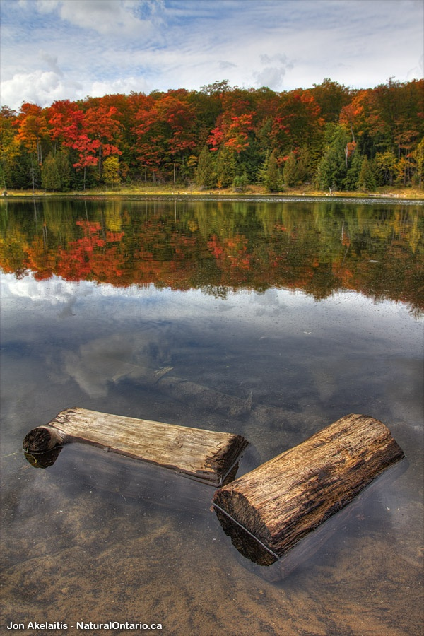 Two old logs in front of some fall colours in Mono Cliffs Provincial Park #ExploreCanada #DiscoverOntario #NatOnt