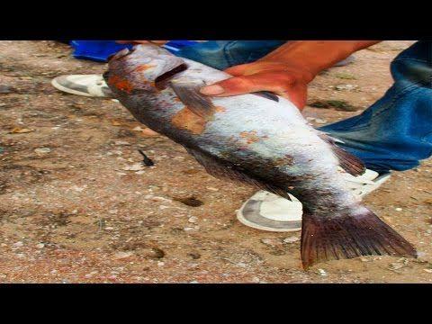 cebo para pescar peces del mar