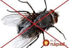 Ako vyhnať z bytu otravné muchy? Toto na ne platí!