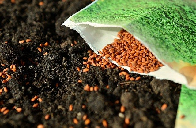 Top Soil Problems and How to Fix them