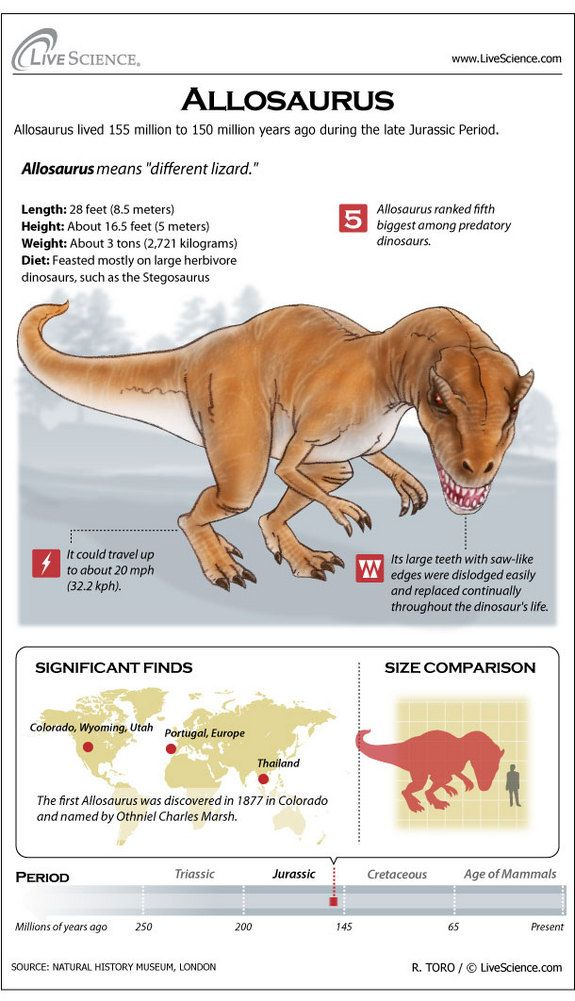 Learn about the huge meat-eating dinosaur Allosaurus.