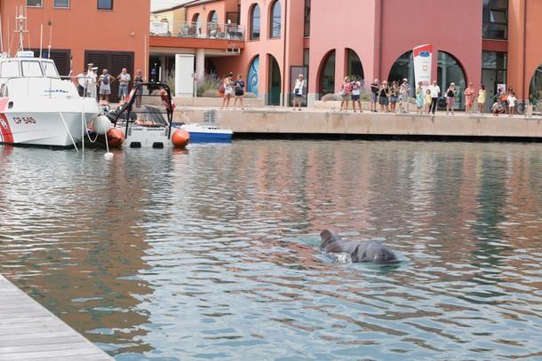 """La balenottera che si è """"persa"""" nel porto di #Loano"""
