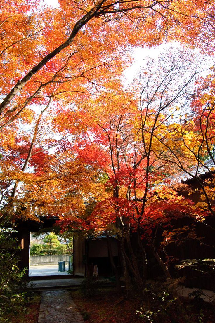 zenpourituji,yawaya,kyoto,Japan