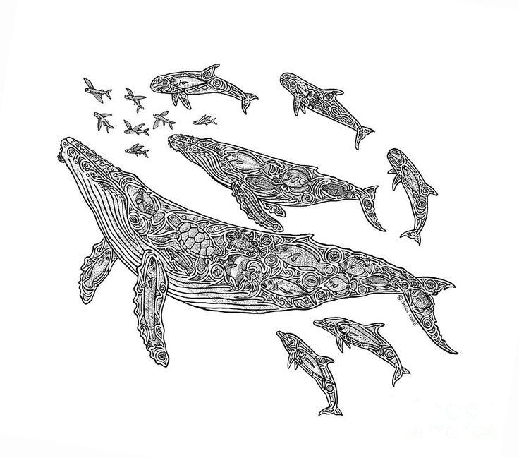 Whale Drawings - Hawaiian Humpbacks by Carol Lynne