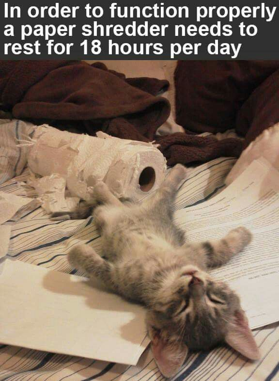 Yep. Such a tough life really! Don't you just feel sad for the poor kiitty paper shredder! ;) LOL