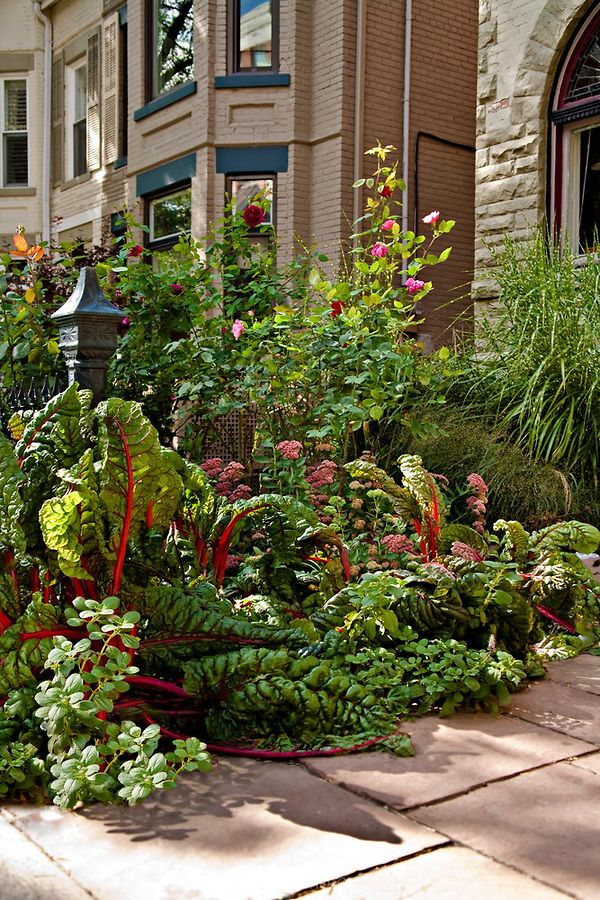 An urban edible landscape including roses, red stemmed chard, Autumn Joy sedum, potato plants, and ornamental grasses, all in the front yard of an urban property