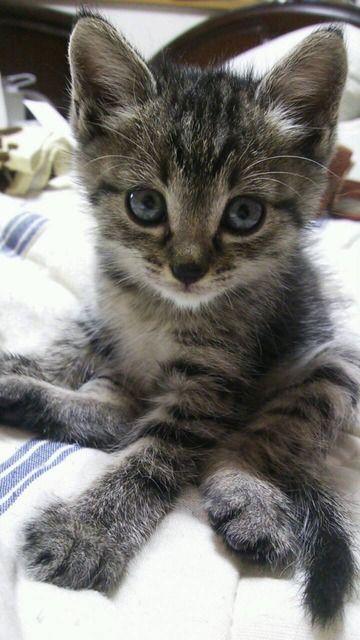 Adorable Kitty                                                                                                                                                                                 もっと見る
