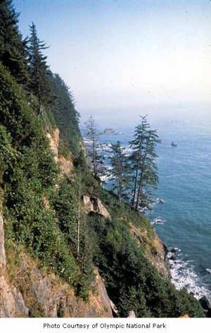 Cliff on the Washington coast south of Third Beach, Olympic National Park, date unknown :: National Park Service