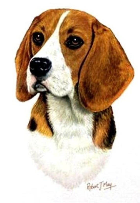 Beagle Dog Head On Twelve 6 Inch Identical Fabric Squares For