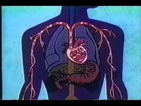 Ansiedad, Cuales son los Tipos de Trastornos de Ansiedad que Existen? - YouTube