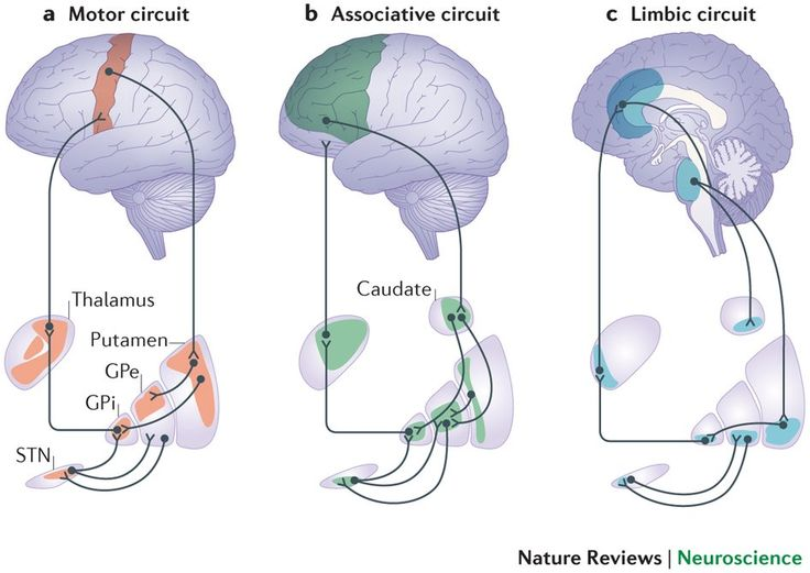 Color-coded map showing regions of the thalamus and basal ganglia (putamen, caudate, globus palladus--GPi and GPe--and subthalamic nucleus--STN--that belong to motor, associative, & limbic systems. Notice the slight overlap between motor & associative and between emotional & associative.