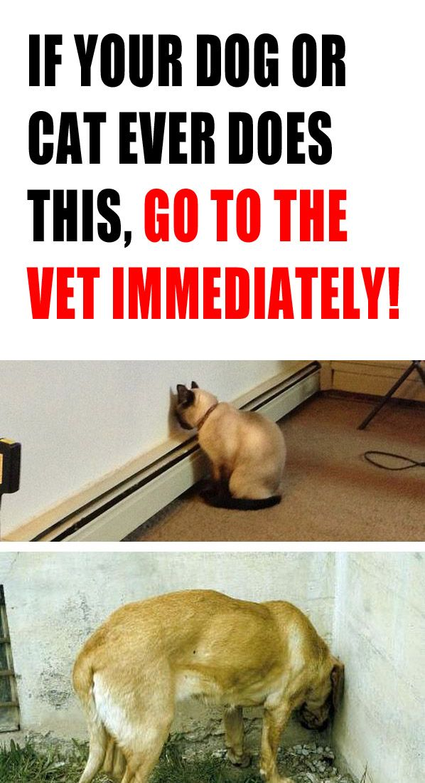 WOW, so scary! Please read, bookmark, and repin. http://theilovedogssite.com/if-your-dog-or-cat-ever-does-this-go-to-the-vet-immediately/