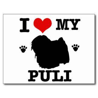 Love my Puli Postcard