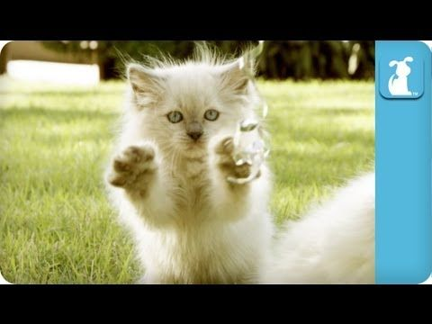 Adorable Fluffy Kittens Playing In The Grass - Cats At Play