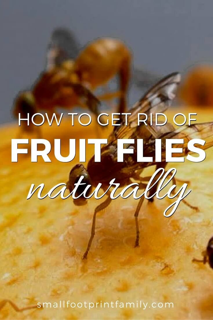 In the heat of summer, with all the fresh produce in your kitchen, fruit flies can become pesky invaders. Here's how to get rid of fruit flies naturally.