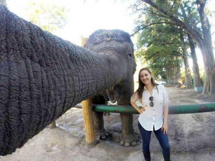 long trunk selfie... - (elephant) - #trunk #elephant #selfie