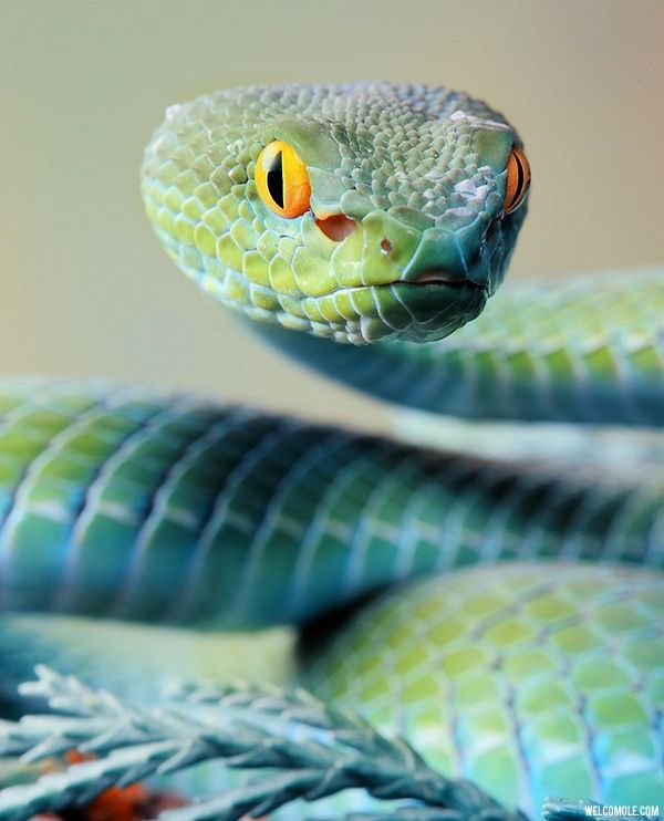Turquoise Snake.. I know that people don't like snakes, but This one's colors are just so unique and beautiful!