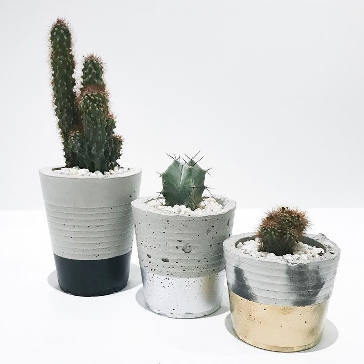 Don't let the cloudy day wore you down! Let these cactus cheer you up & brighten up your Thursday   In picture - @yourpalalcreative planter  plants! Available in store!  We are open today 10am-6pm  #shopkitsu #lockestreetshops #hamont #planters #concreteplanters #cactus