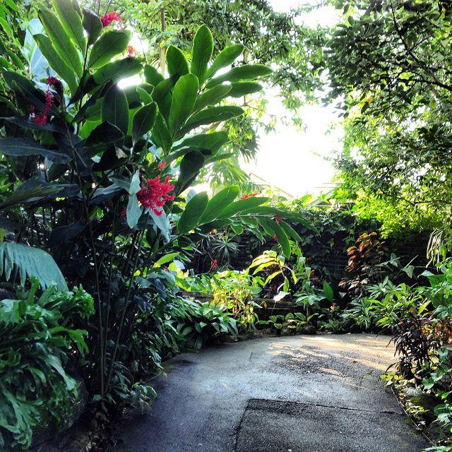 Photo far out flora tropical gardens pinterest for Balinese garden designs ideas
