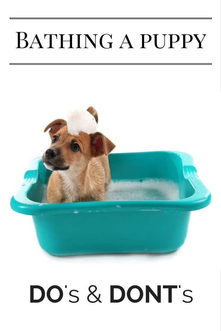 Is your dog in need of a bath? Whether you have a stinky puppy that loves to dig in the dirt (or garbage!) or a puppy with a sensitive skin condition, follow this guide to choosing the best shampoo for your puppy, and you'll be guaranteed to have the cleanest puppy on the block.
